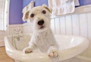Is grooming your dog at home healthy